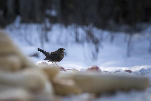 Mały ptak siedzący na ziemi