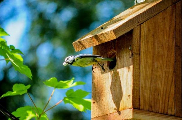 Mały ptak w locie