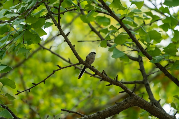 Mały ptak z lasu ginkgo