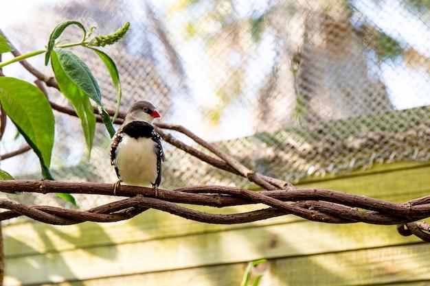Mały ptak zięba na gałęzi w szkółce ptaków. zdjęcie wysokiej jakości