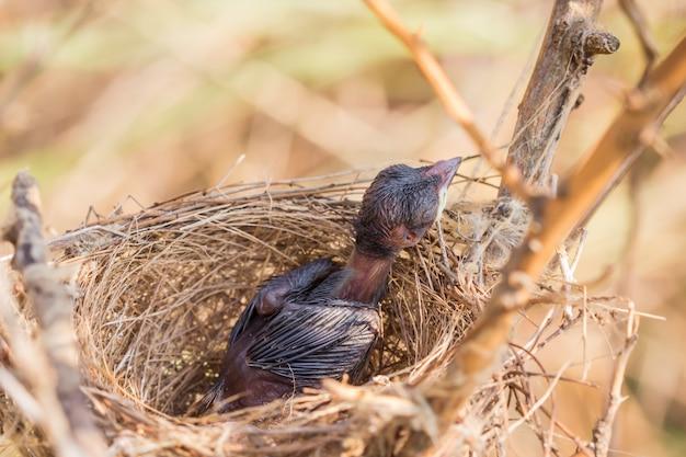 Mały ptaszek leżał w gnieździe.