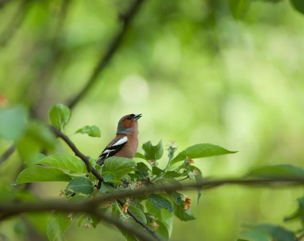 Mały ptaszek na gałęzi otoczony liśćmi folia