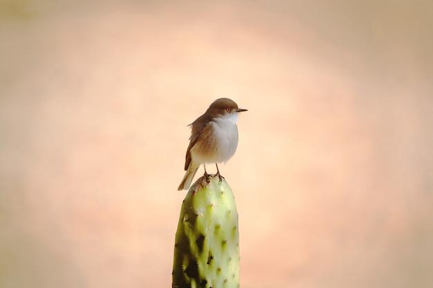 Mały ptaszek na kaktusowej, minimalistycznej perspektywie z czerwonymi oczami