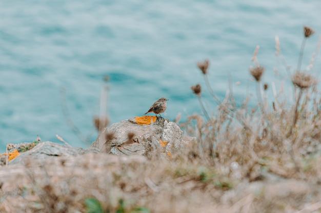 Mały ptaszek nad oceanem z roślinami
