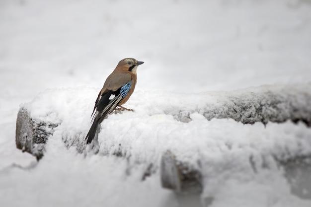 Mały ptaszek stojący na gałęzi pokrytej śniegiem