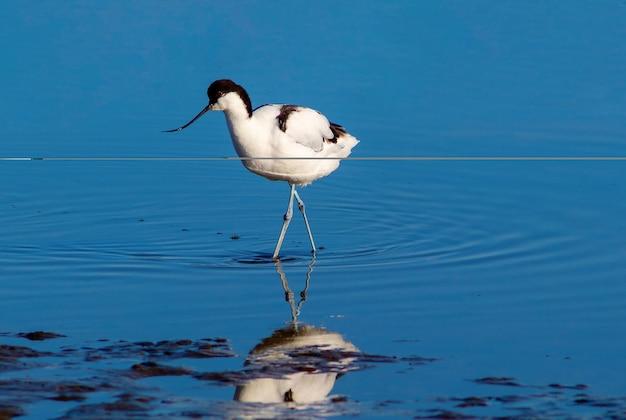 Mały ptaszek w błękitnym jeziorze w słoneczny dzień. namibia
