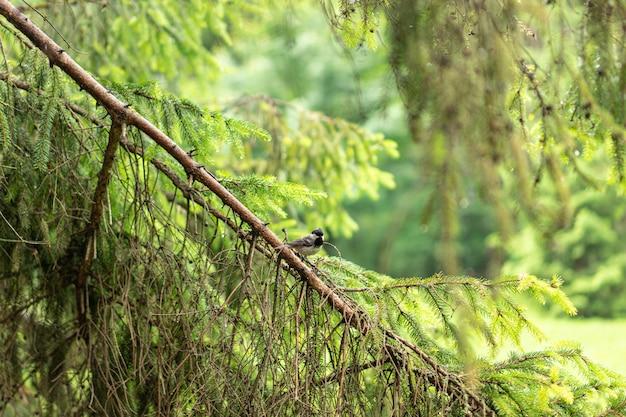 Mały ptaszek w lesie. zamknij się portret europejskiego ptaka na pniu drewna w lesie latem.