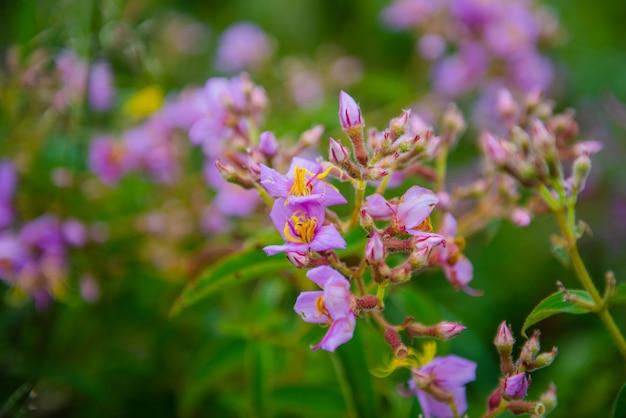 Mały purpurowy kwiat