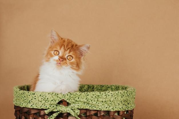 Mały puszysty kotek imbir siedzi w zielonym koszu na jasnobrązowym tle