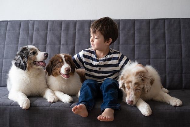 Mały śliczny chłopiec bawi się z trzema mały ładny owczarek australijski czerwony trzy kolory merle szczeniak. miłość i przyjaźń między człowiekiem a zwierzęciem.
