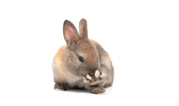 Mały śliczny królik na jasnym tle wakacyjny easter pojęcie.