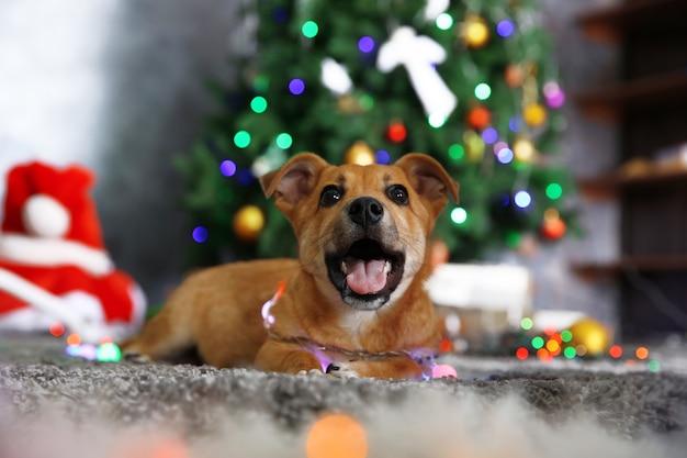 Mały śliczny zabawny pies z girlandą na świątecznej powierzchni