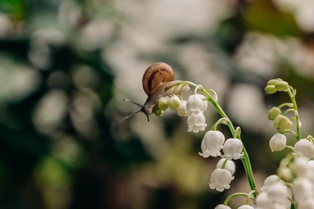 Mały ślimak czołga się po cienkiej łodydze kwitnącej białymi kwiatami konwalii, znajdującej się w bukiecie bokeh krzewów i drzew