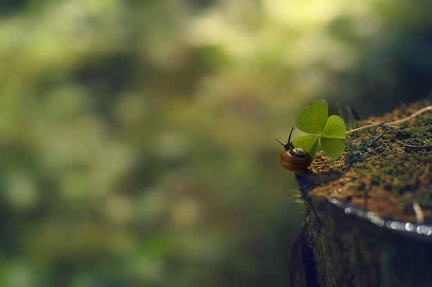 Mały ślimak czołga się po pniu w kierunku zielonego liścia w porannym lesie.