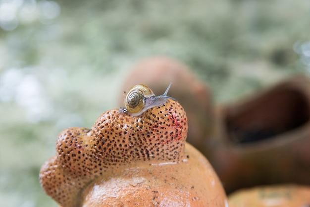 Mały ślimak na ceramice, skupienie selektywne.