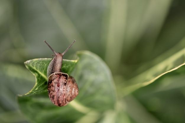 Mały ślimak pełzający wśród zielonych liści
