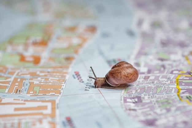 Mały ślimak pełznie po mapie miasta