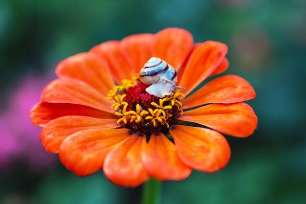 Mały ślimak siedzi w centrum jasnopomarańczowego koloru. lato