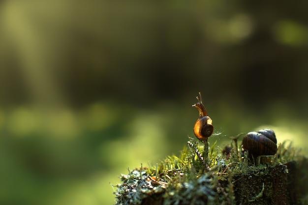 Mały ślimak wspiął się w lesie na pionową gałązkę i odwraca wzrok, jest oświetlony promieniami słońca, kopiuje miejsce na tekst.