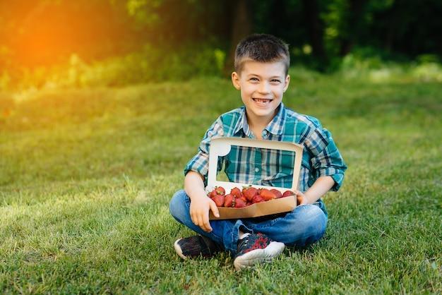 Mały słodki chłopiec siedzi z dużym pudełkiem dojrzałych i pysznych truskawek. żniwa. dojrzałe truskawki. naturalna i pyszna jagoda.
