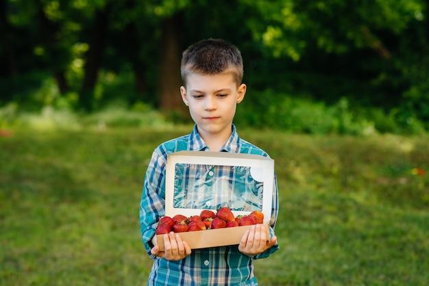 Mały słodki chłopiec stoi z dużym pudełkiem dojrzałych i pysznych truskawek. żniwa. dojrzałe truskawki jagody naturalne i pyszne.