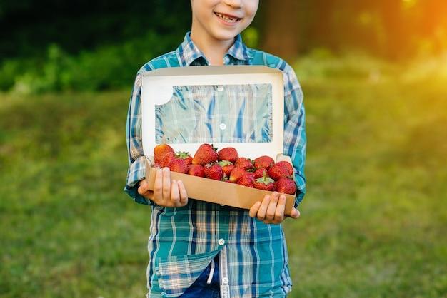Mały słodki chłopiec stoi z dużym pudełkiem dojrzałych i pysznych truskawek. żniwa. dojrzałe truskawki. naturalna i pyszna jagoda.