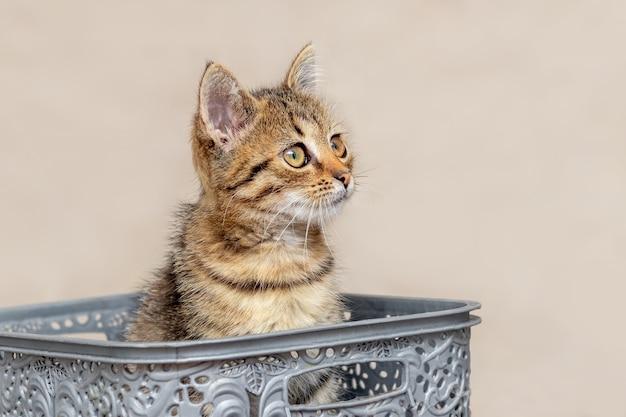 Mały słodki kociak o ciekawskim wyglądzie siedzi w plastikowym pudełku