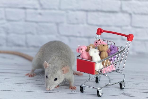 Mały słodki szary szczur obok wózka z zakupami jest pełen kolorowych misiów. zakupy na rynku. kupowanie prezentów na urodziny i święta.