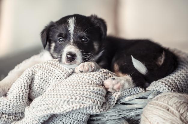 Mały słodki szczeniak leżący w swetrze.