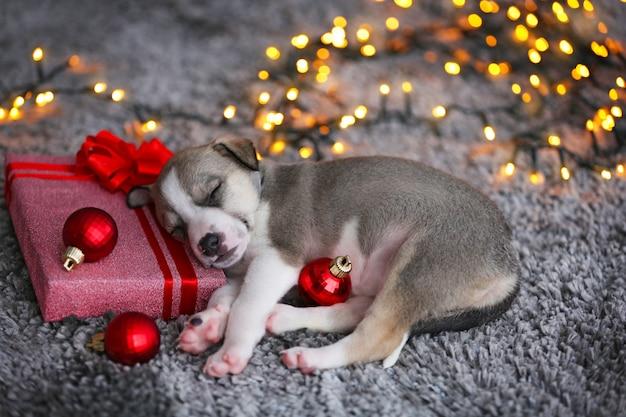 Mały słodki szczeniak śpi na tle bożego narodzenia