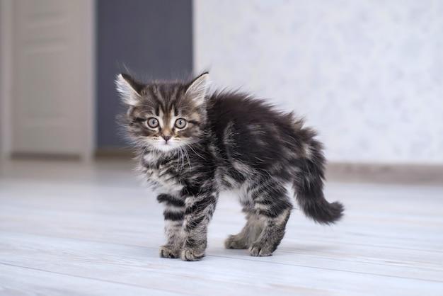 Mały śmieszny kotek na podłodze