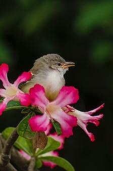Mały śpiewający ptak siedzący na kwiatku