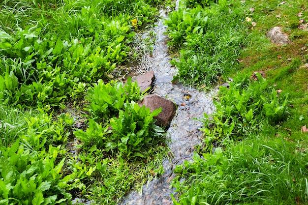 Mały strumień płynący wzdłuż pola, na którym rośnie zielona trawa