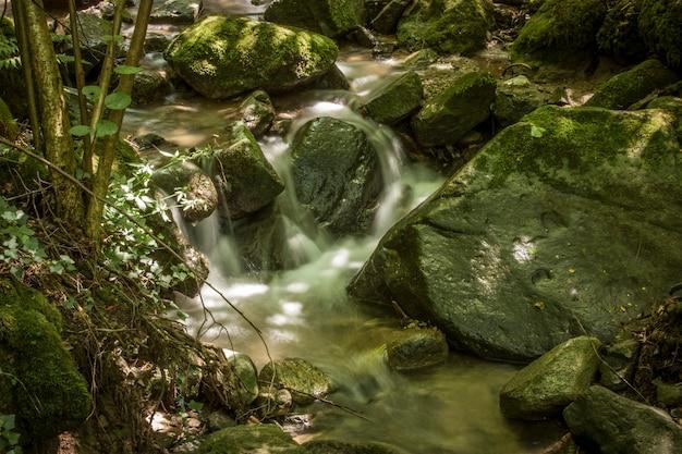 Mały strumień w lesie północnych włoch. woda przepływa przez skały, aby zejść. wodospady schivanoia, teolo, włochy.