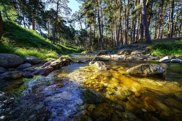 Mały strumień w lesie ze światłem słonecznym między drzewami o wschodzie słońca.