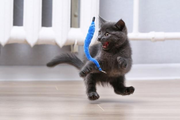 Mały szary kotek bawi się zabawką na wędkę zabawki dla kota