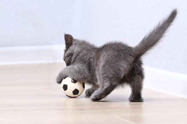 Mały szary kotek bawi się zabawką piłka piłka nożna zabawki dla kota