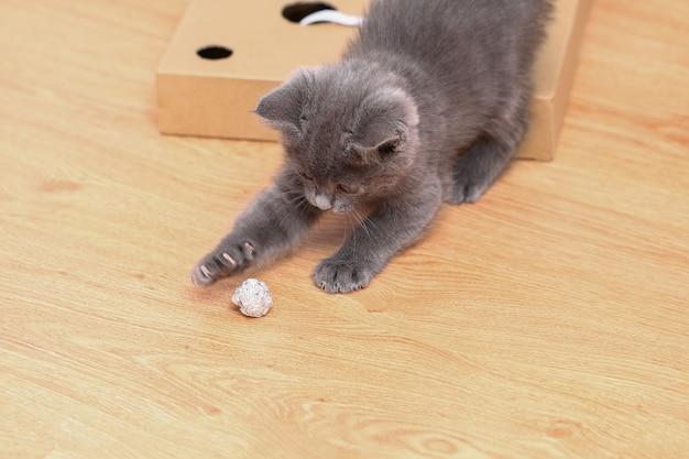 Mały szary kotek bawi się zabawkami z folii i piłeczką