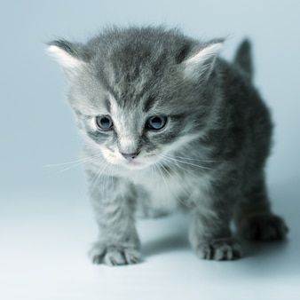 Mały szary kotek na szaro