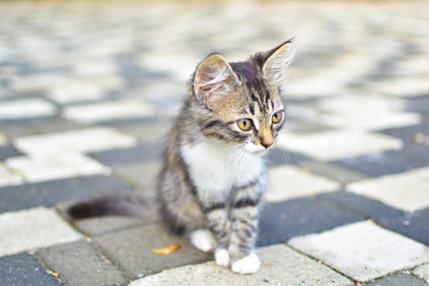 Mały szary kotek sam w mieście na ulicy zagubiony