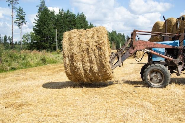 Mały traktor na specjalnym urządzeniu prowadzi po polu belę siana na składowisko.
