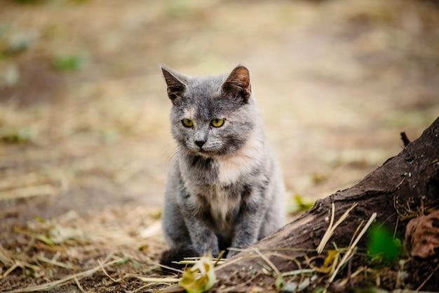 Mały trójkolorowy bezdomny kotek wygrzewa się na słońcu. porzucone zwierzęta w mieście. nieostrość