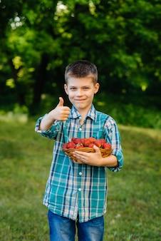 Mały uroczy chłopiec stoi z dużym pudełkiem dojrzałych i pysznych truskawek. żniwa. dojrzałe truskawki. naturalna i pyszna jagoda.
