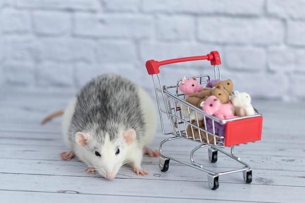 Mały uroczy czarno-biały szczur obok wózka spożywczego jest pełen kolorowych misiów. zakupy na rynku. kupowanie prezentów na urodziny i święta.