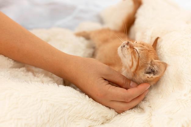 Mały uroczy rudy kotek pręgowany leży i zasypia na miękkiej sofie w pokoju.