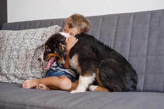 Mały właściciel chłopca zwierzaka uścisk owczarka australijskiego szczeniaka na kanapie. trzy kolory.
