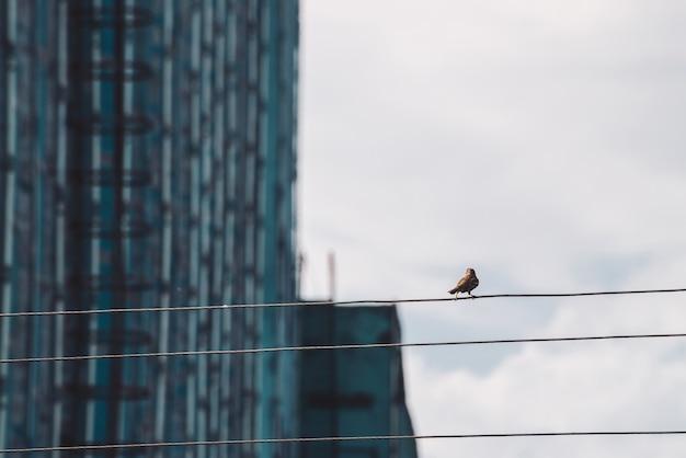 Mały wróbel chodzi po drutach. mały ptak na kablu w strefie przemysłowej. ptaszyna na drucie na tle budynek ściana w bokeh.