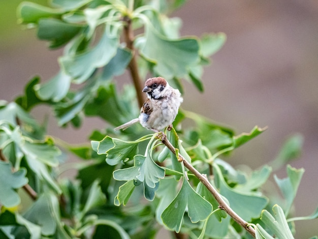 Mały wróbel siedzący na gałęzi drzewa z zielonymi liśćmi