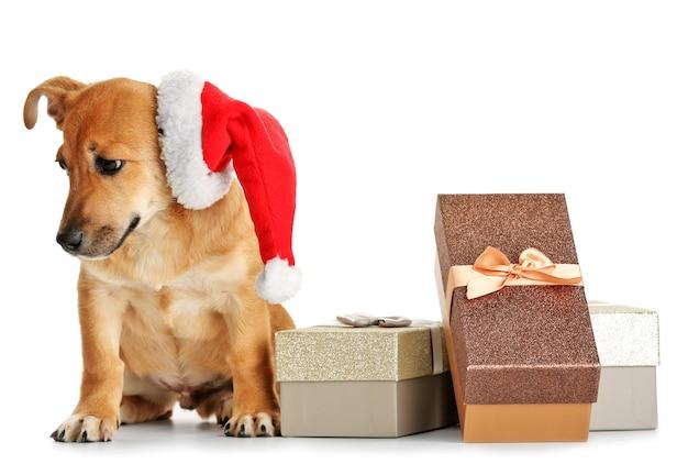 Mały zabawny słodki pies z czapką świętego mikołaja i pudełkami prezentowymi, na białym tle