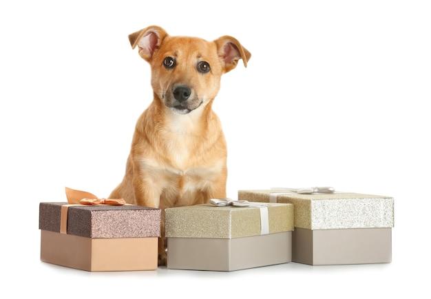 Mały zabawny słodki pies z pudełkami na prezenty, na białym tle
